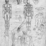 anatomy-sketches