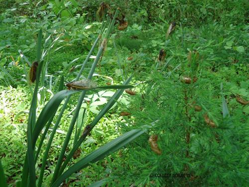 cicadas-2