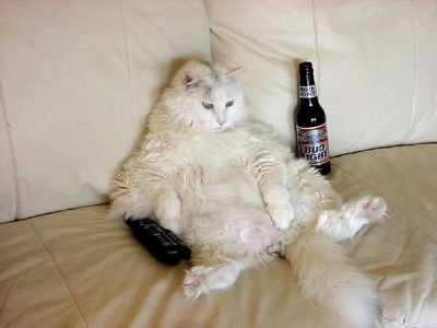 Drunk-Kitteh-Couch-Potato