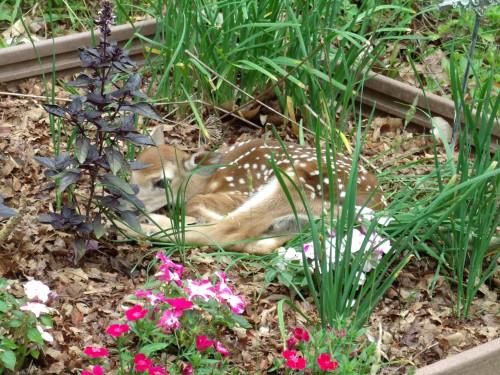 bambi-1-colleen-doran