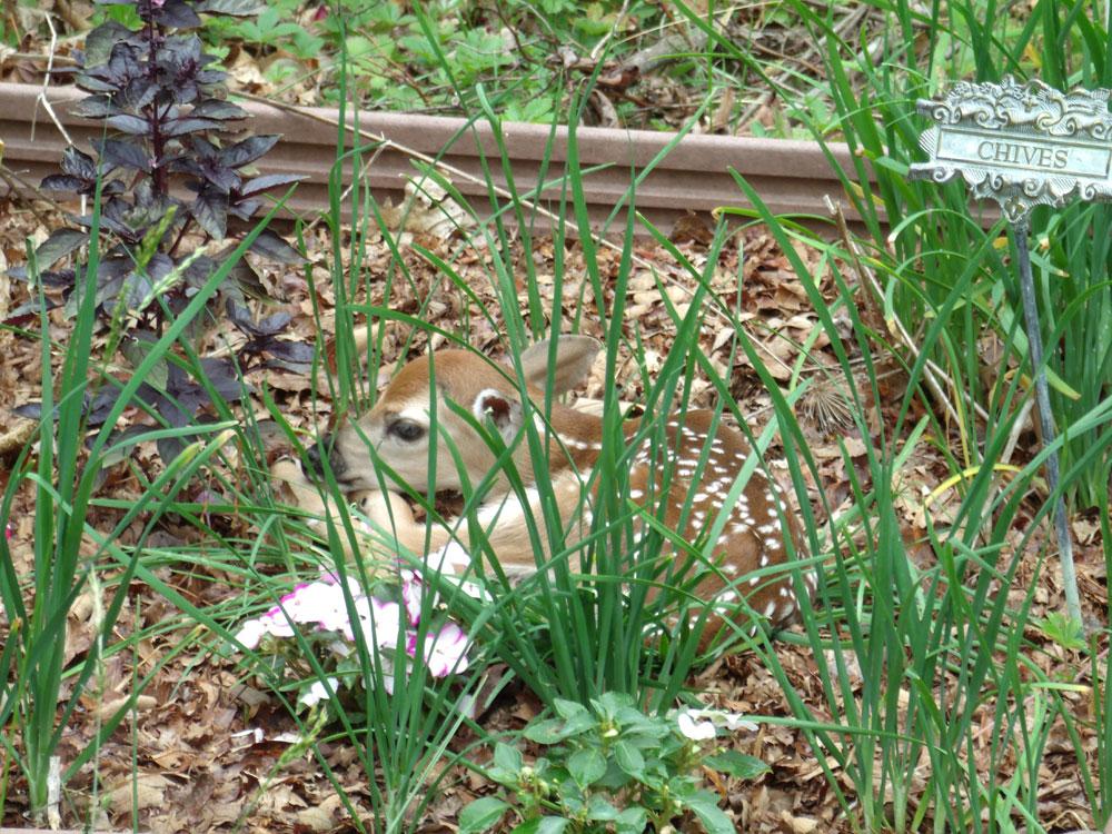 bambi-3-colleen-doran