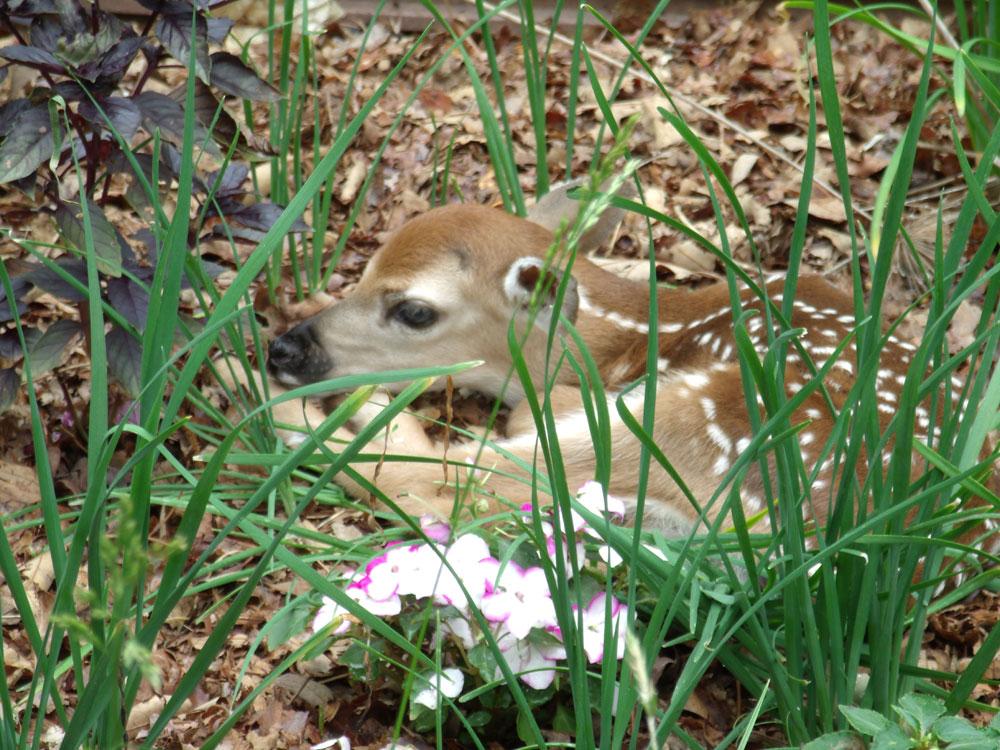 bambi-4-colleen-doran