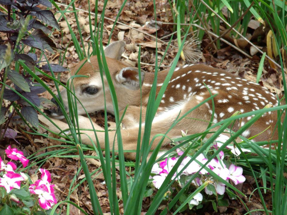 bambi-5-colleen-doran