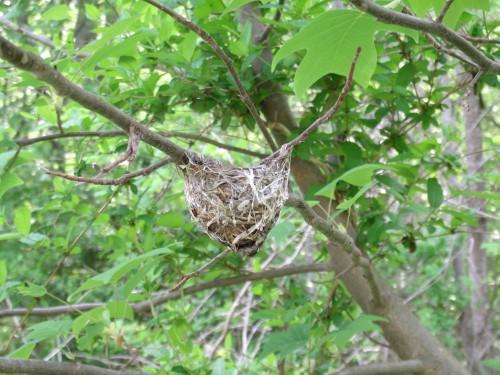 bird-nest-5-8-15