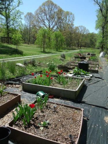 garden-4-30-15